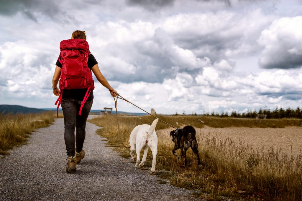 man hiking, relaxing, out for walk, on path with 2 dogs on leash